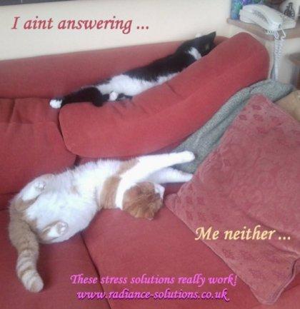 catnaps2stress